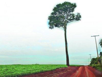 Cuenca de Itaipú  perdió 237 mil ha., pese a la Ley de Deforestación Cero