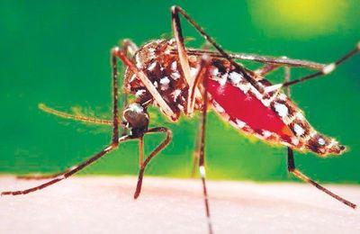 Salud ajusta labor de prevención ante posible brote de dengue