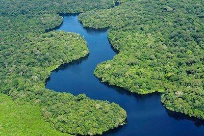Preservar bosques tropicales es fundamental para mitigar la crisis climática