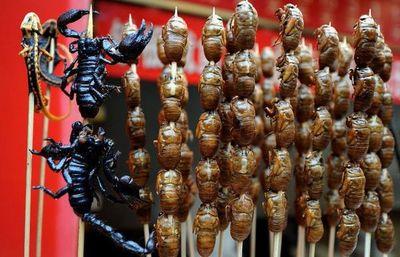 ¡Cuidado, insectos!, todo bicho que camina va a parar al asador