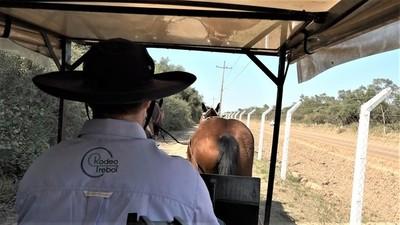 Paseos en Sulkys: un viaje en el tiempo hacia el antiguo chaco