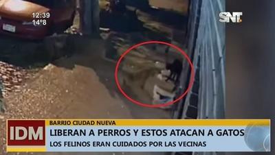Se ensañan con gatos en barrio de la capital, denuncian