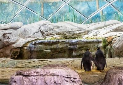 Pareja de pingüinos homosexuales adoptaron un huevo en el zoo de Berlín
