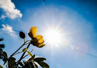 Meteorología anuncia jornada fresca a calurosa con vientos del noreste