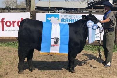 En la Rural de Corrientes Argentina eligieron las mejores hembras Brahaman, Brangus y Braford
