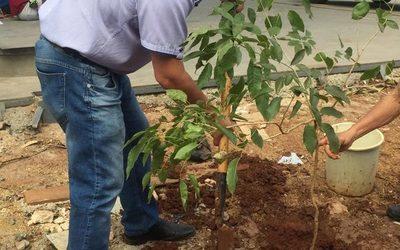 Concejal hace «marketing» plantando tajy
