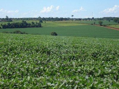 Yerutí, una colonia con nubes de agrotóxicos