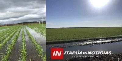 SIEMBRA DE ARROZ A GRAN ESCALA PUEDE REACTIVARSE EN ITAPÚA