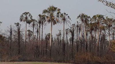 Incendio en el Pantanal: Unas 21.000 hectáreas fueron consumidas