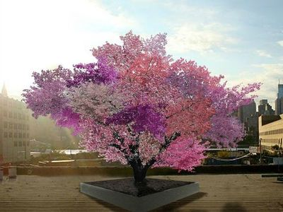 El increíble árbol que da 40 tipos de frutos