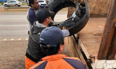 Recogen gran cantidad de neumáticos arrojados al costado de la ruta 7
