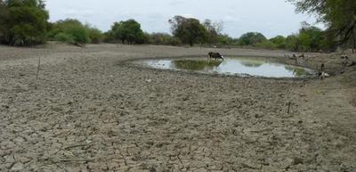 Australia con una fuerte liquidación de hembras como consecuencia de la sequía
