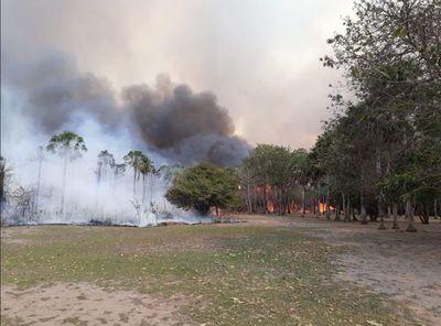 Abren los portones para que el ganado salga del campo y se salve del incendio en la zona de Alto Paraguay