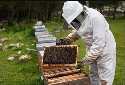 Muerte de abejas en Brasil, un mensaje para la humanidad