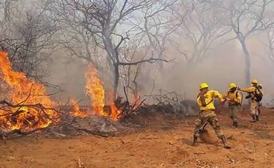 Bolivia: Incendio forestal alcanza 460 hectáreas