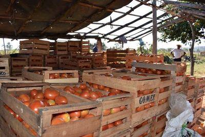 Tomateros de Arroyos y Esteros se sienten engañados por ministro
