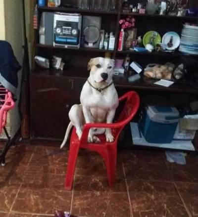 El perro fan de Polémica en el Bar, ahora ve MasterChef