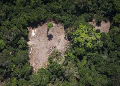 """La deforestación, """"principal causa"""" de los fuegos amazónicos"""