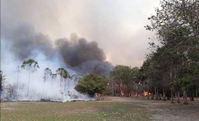 HOY / Arman brigada de rescate de animales afectados por los incendios forestales en el Chaco