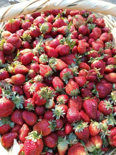 Continúan ferias de frutilla, tomate y mandioca en Central
