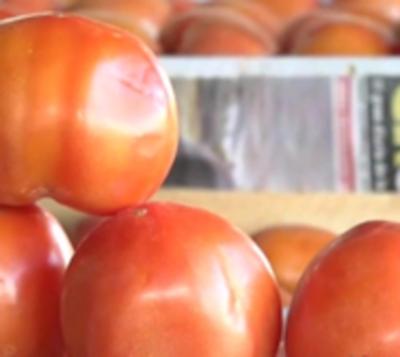 Contrabando mata empleos: Tomateros reportan millonarias pérdidas