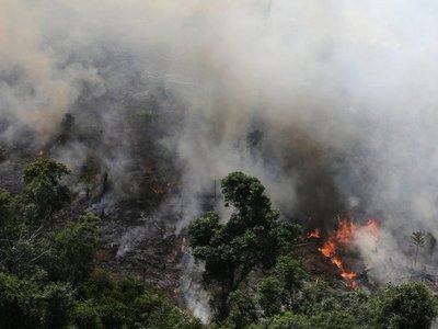 CAF donó USD 500.000 para incendios en el Amazonas