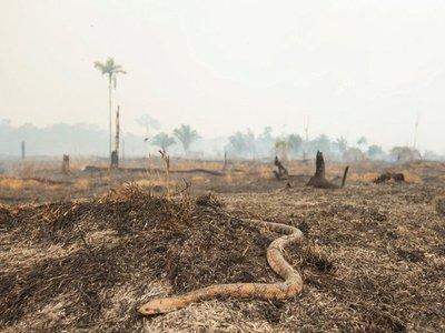 Militares luchan contra incendios y sigue presión global por Amazonia