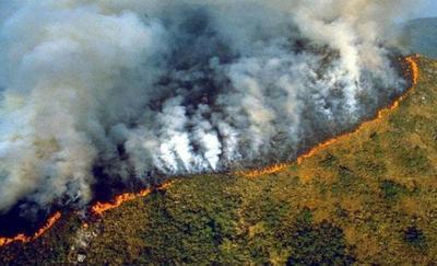 Animales en estampida y un silencio estremecedor se apoderan de la Amazonía
