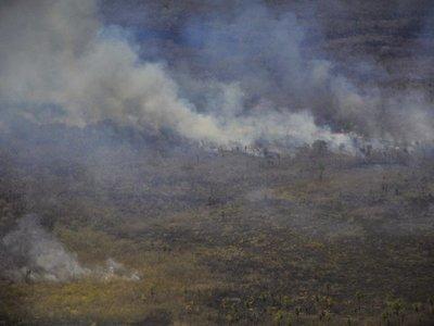Estudiantes de Biología alertan sobre masivos incendios forestales en el país