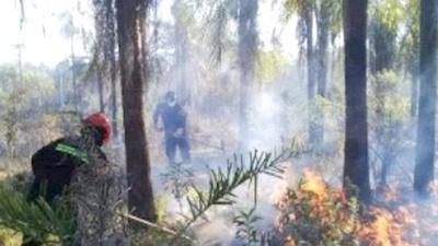 """""""Arde Py""""  para salvar áreas verdes"""