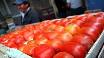 HOY / Esperanza entre productores de tomate por eventual repunte de precios