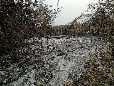 WWF pide al Gobierno acciones tras incendio en el Pantanal paraguayo