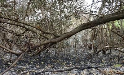 HOY / 37.000 hectáreas arrasadas  por el fuego: piden reforestar  para recuperar la vegetación