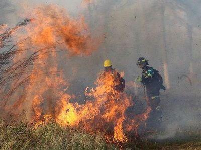 En un infierno forestal, pulmones del planeta arden entre las llamas