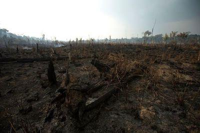 Brasil y Chile convocan a países amazónicos contra incendios, sin Venezuela