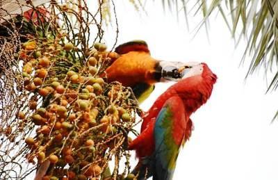 La belleza de las aves conquista el corazón de los luqueños •
