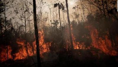 ATP lanza una campaña ambiental que pretende involucrar a todo el Paraguay
