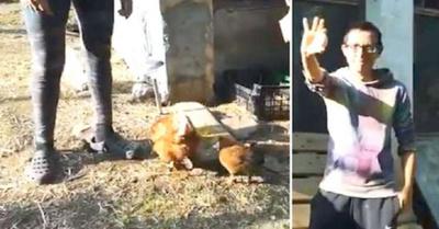 """Separan a gallos  de gallinas para  evitar """"violación"""""""