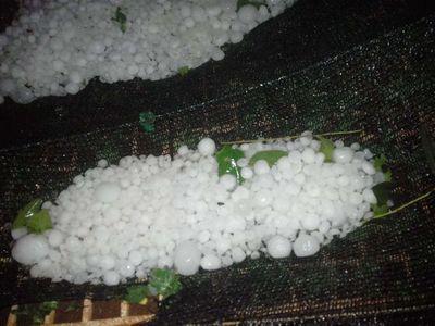 Granizos causaron estragos en Itapúa