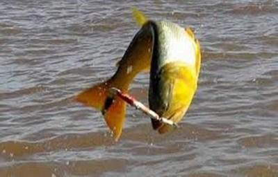 Pesca Internacional del Dorado regresa después de 21 años