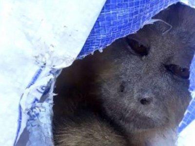 Capturan a un mono que robaba lencerías