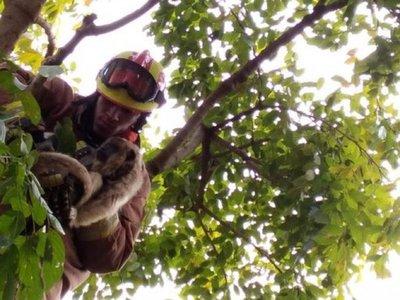 Un karaja es rescatado y devuelto a su hábitat en Caaguazú