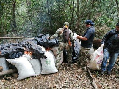 Destruyen 5 hectáreas y 2.840 kilos de Marihuana en Caazapá