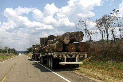 Infona desarticula contrabando forestal por 5 millones de dólares