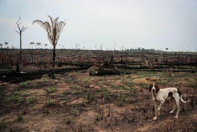 La deforestación en la Amazonía brasileña saltó un 222 % en agosto
