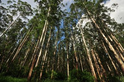 Se necesitan más políticas de preservación de reservas naturales, afirman
