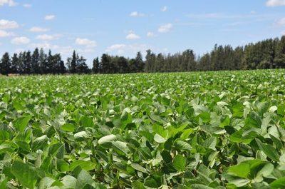 Productores piden más seguridad para la siembra