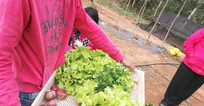 Agricultura  social para  reinserción