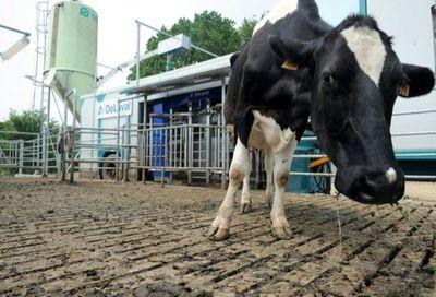 Francia: Vacas con baja emisión de carbono para ayudar al planeta