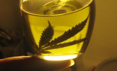 Cámara de Senadores aprueba uso medicinal del cannabis